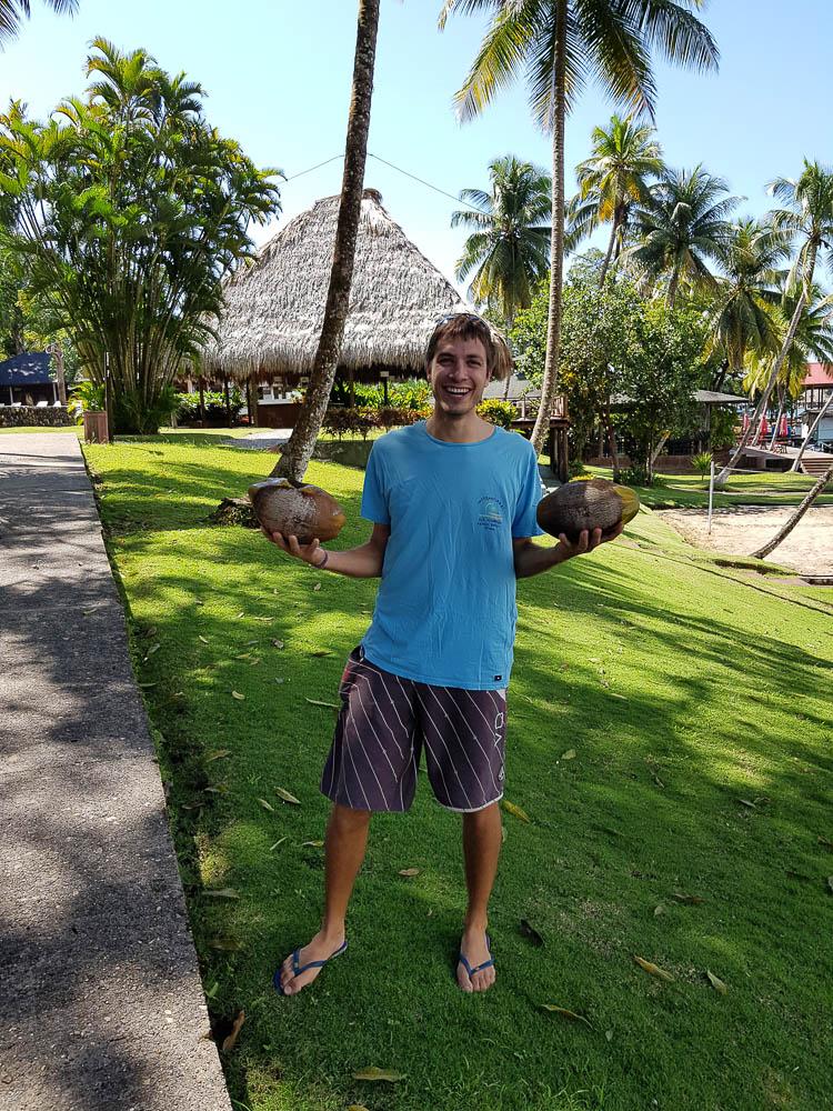 Recherche de noix de coco à la marina Nana Juana, au Rio Dulce.