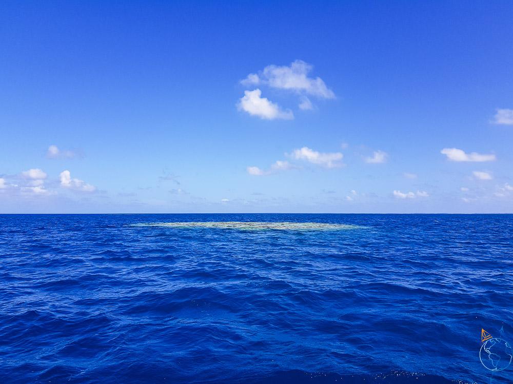 Disque de corail à l'intérieur du lagon de Raroia.