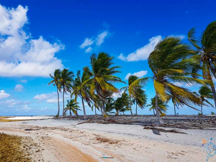 Plage de cocotiers sur un motu de l'atoll de Raroia.