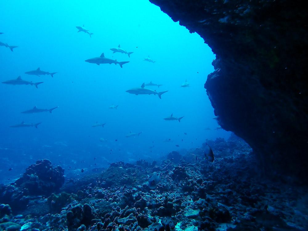 Grotte sous l'eau où on peut admirer les requins gris à Fakarava.