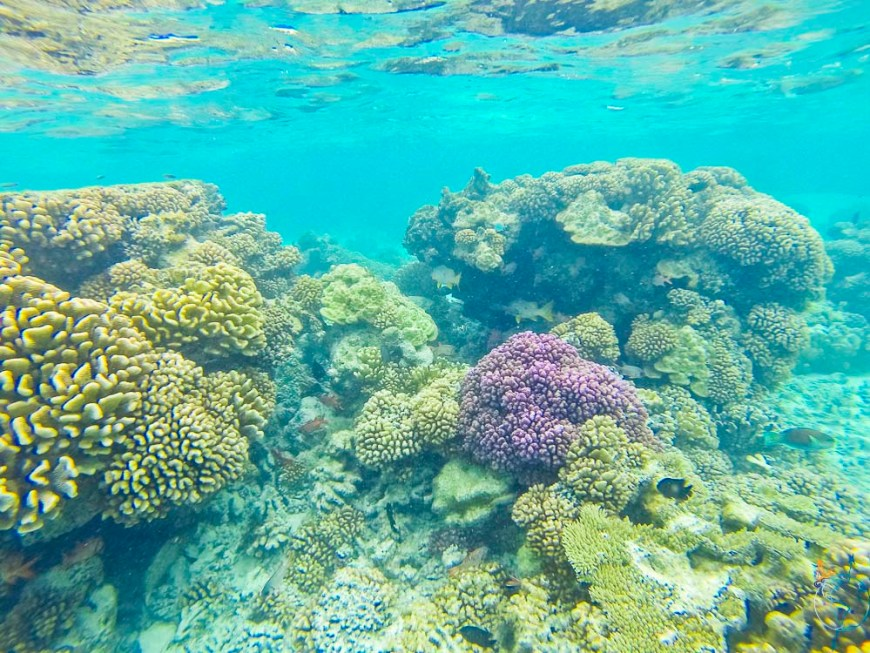 Coraux dans peu de profondeur dans l'Anse Amyot.