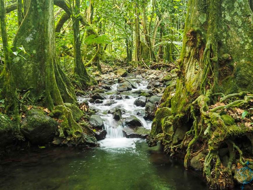 Cascade dans la jungle, sur le sentier des ancêtres.