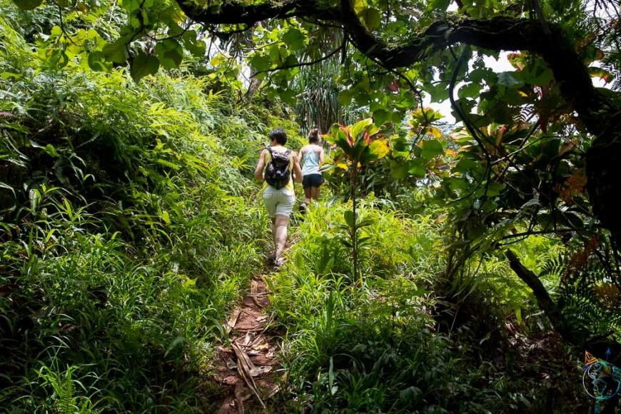 Promenade dans la jungle tropicale et la végétation dense.
