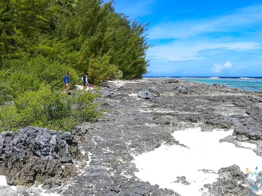 Marche sur le platier et les coraux du motu Fareone à Moorea.
