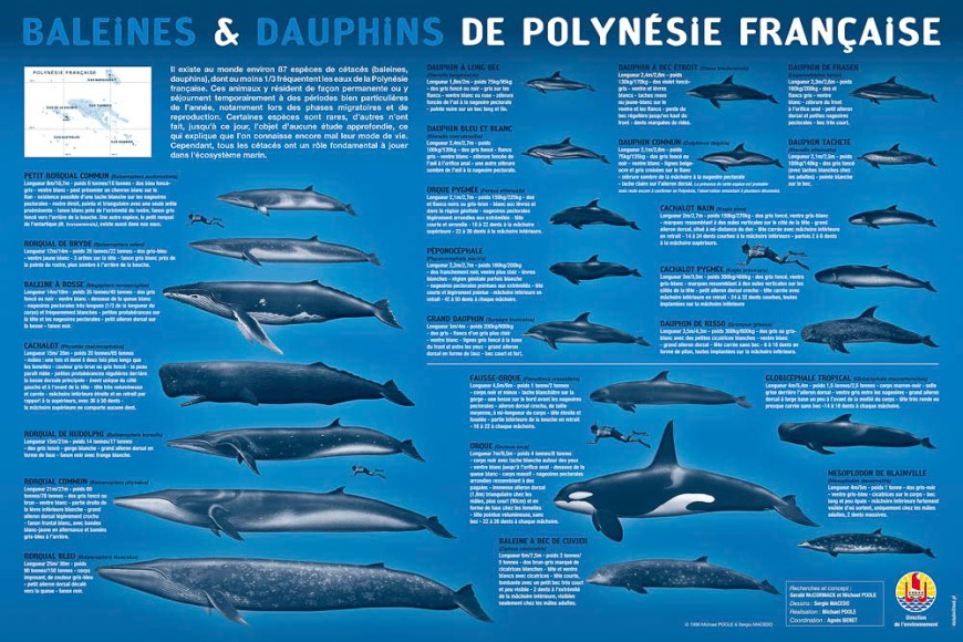 Fiche de recensement des cétacés en Polynésie française.