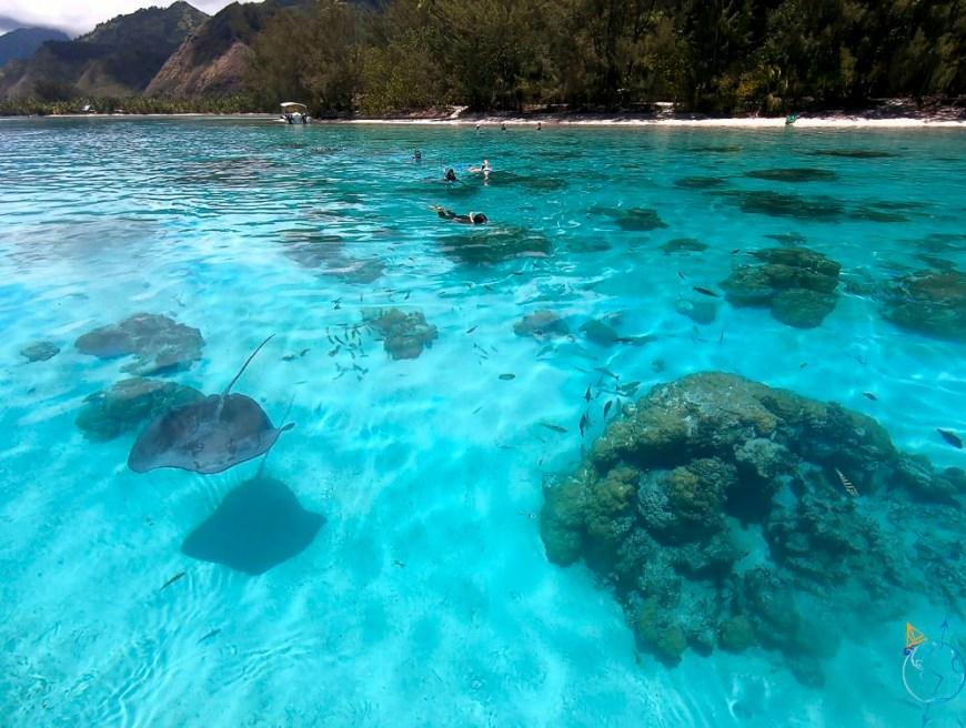 Snorkeling dans l'eau turquoise entre les deux motu de Moorea.