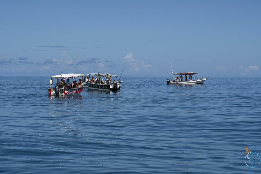 Prestataires de sortie baleines à bosse à Moorea.