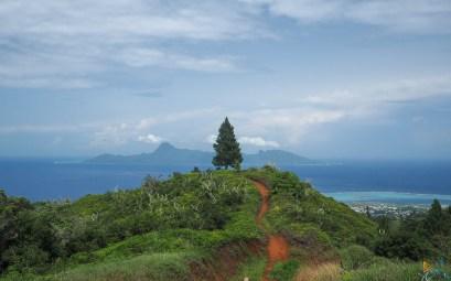 Pin tout seul face au panorama sur Moorea et à l'océan Pacifique.