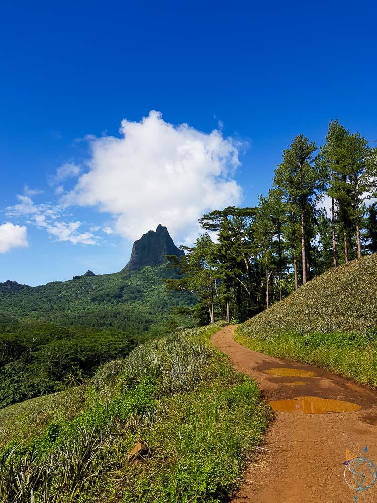 Sur les sentiers autour de la route des Ananas, au pied du mont Rotui.