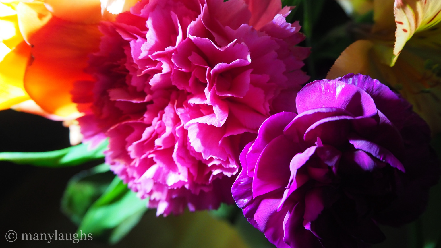 Colorful flowers – manylaughs