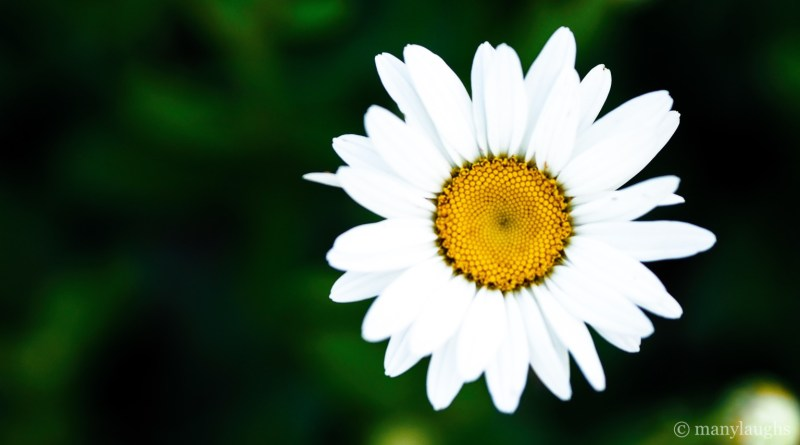 In the florets of a daisy, I found the secrets of the Earth.