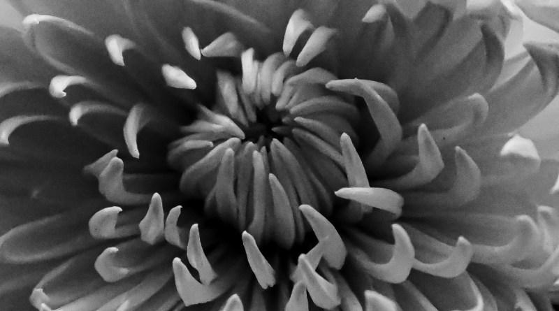 Flower fangs