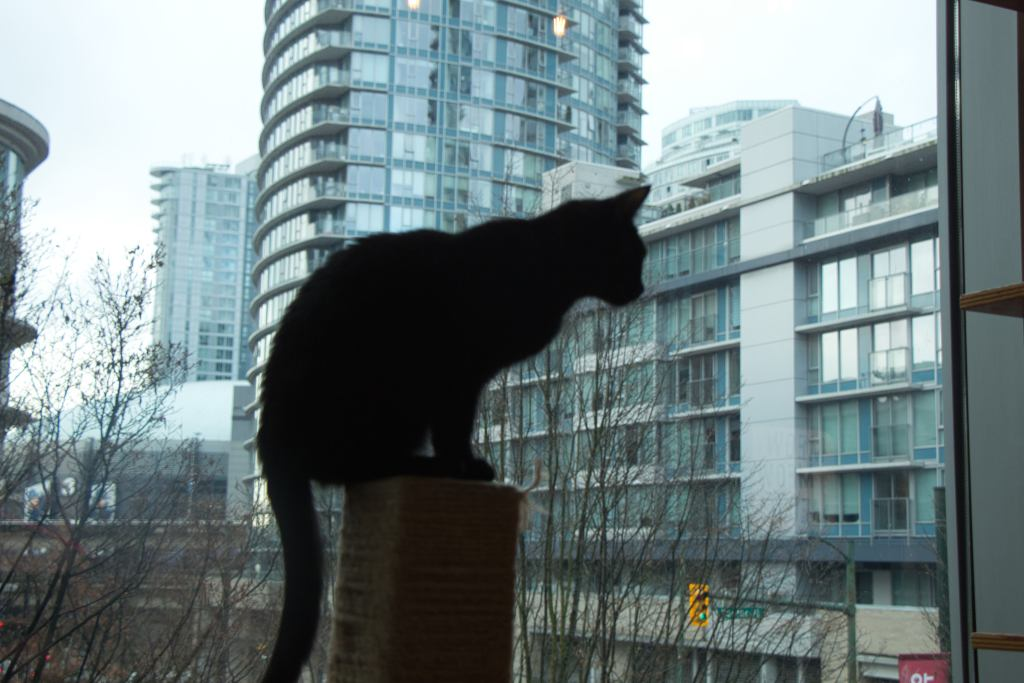 A small black cat on a scratching post, a city's glass condos in the background