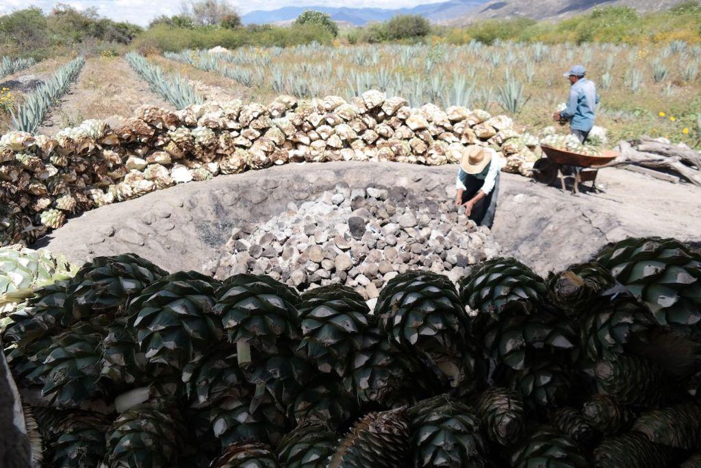 Cozinhando agave