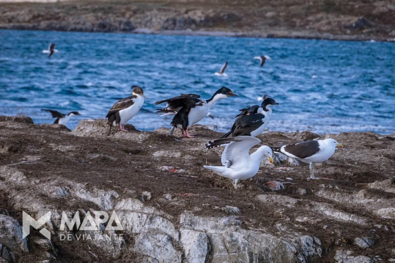 Ilha dos Pássaros, primeira parada no Canal de Beagle