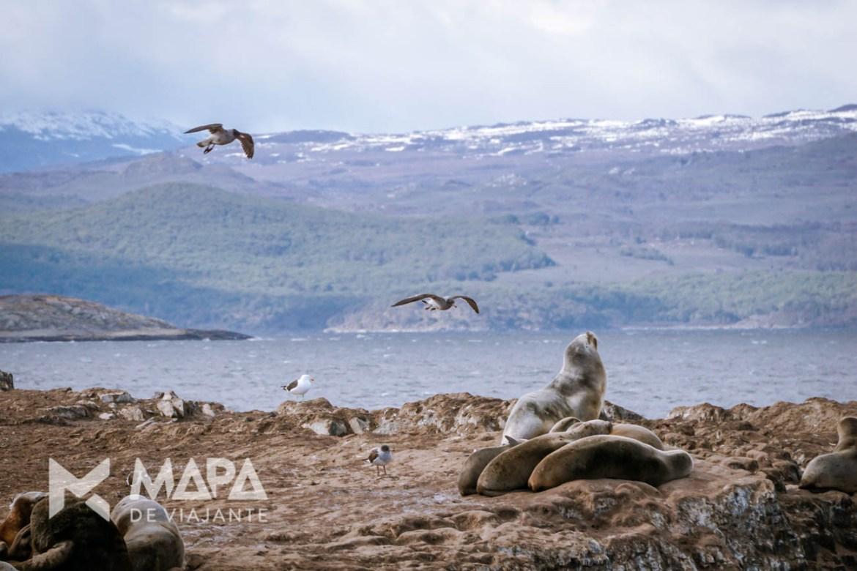 A ilha dos lobos (na verdade, leões marinhos), segunda parada para observar e fotografar.