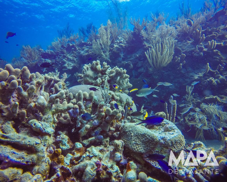 Mergulho Caribe Colombiano