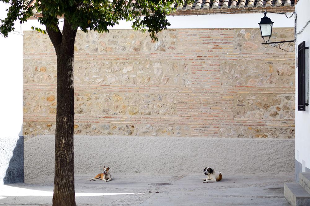 Alpujarra-Dogs-Sun-1000px-opt