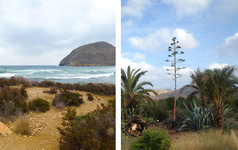Travel photos of Cabo de Gata Spain's desert fauna and Mediterranean waters