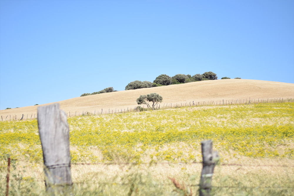 Image of the beautiful countryside near Vejer de la Frontera, Spain.