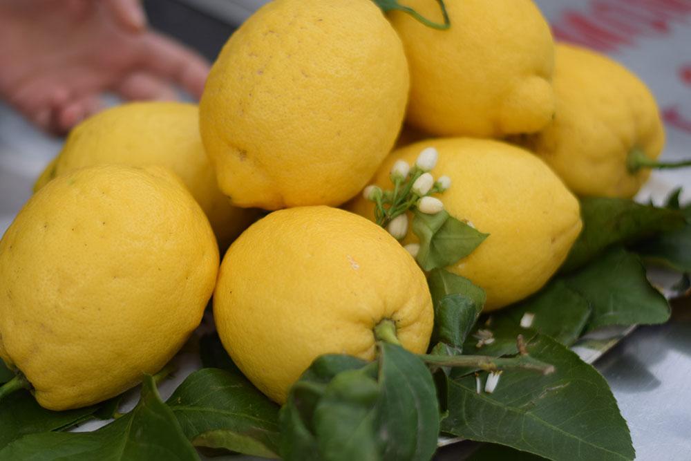 Photos of ripe lemons in Positano, Italy.