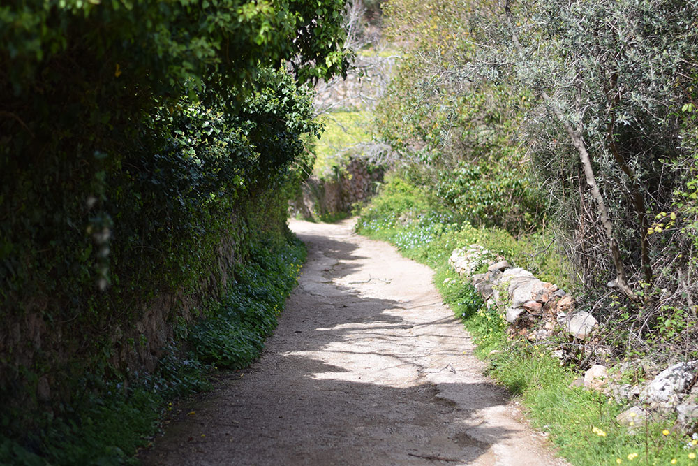 A dirt path lined with trees, grass, wildflowers and stone leading to Finca Son Mico in Mallorca, Spain.