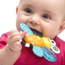 Выбираем прорезыватель для зубов: виды прорезывателей, советы по выбору