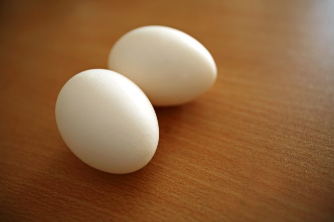 coquille d'œuf