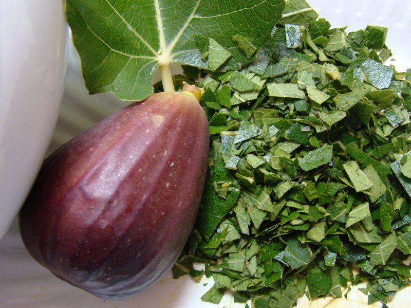 feuilles de figuier