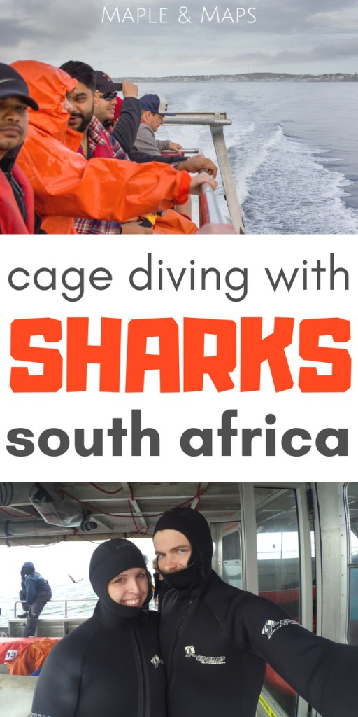 Cage Diving with Sharks in South Africa