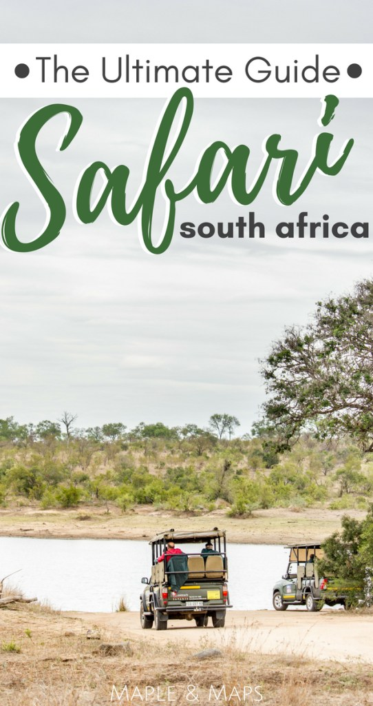 The Ultimate Guide to a South Africa Safari