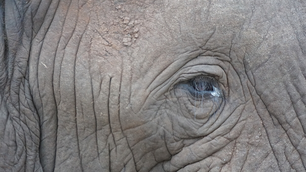 Animal Interactions In South Africa