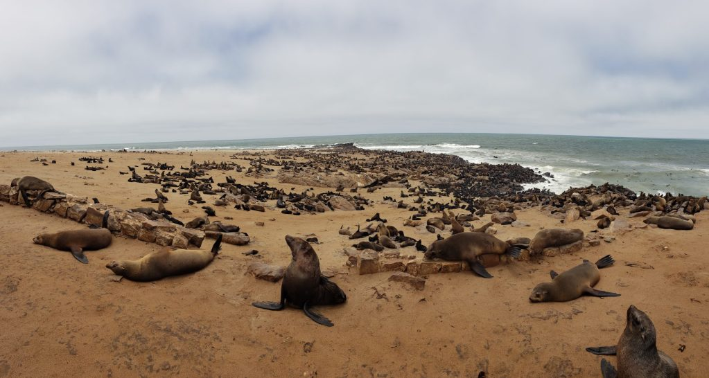 Namibian Road Trip Cape Fur Seals