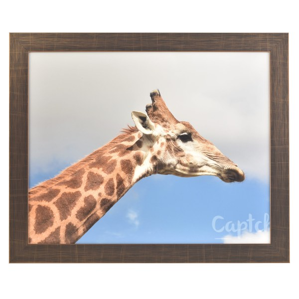 Freestyle bronze picture frame without mount