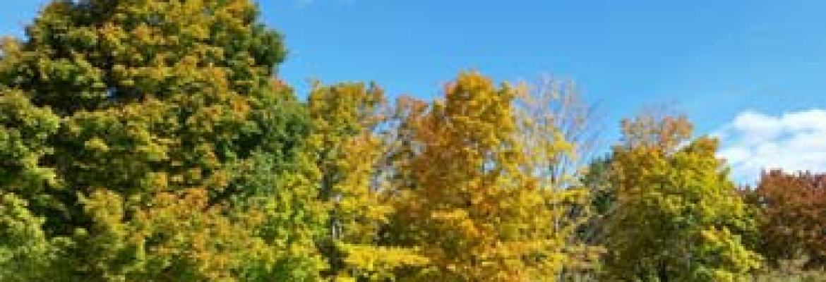 Fall Foliage Camping in Vermont   Top Vacation
