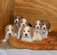 puppy_group.jpg