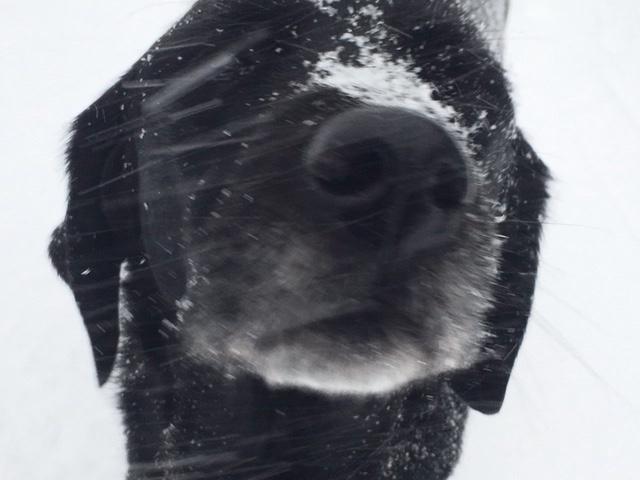 Maplewood Dog