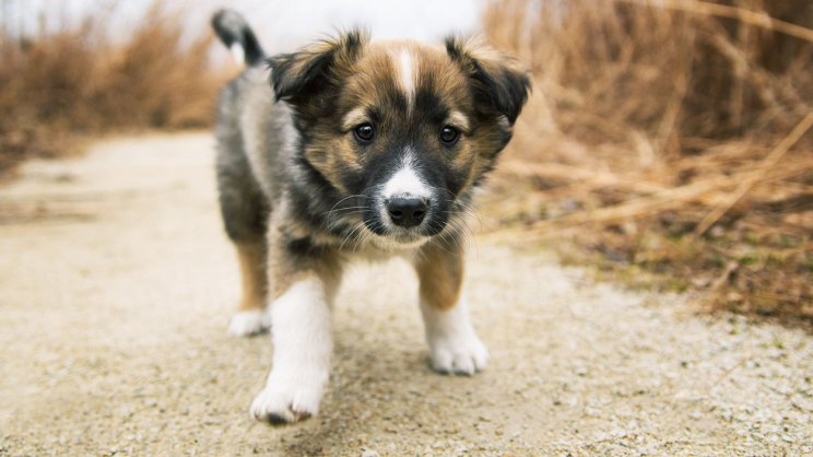 Young puppy walking down a path