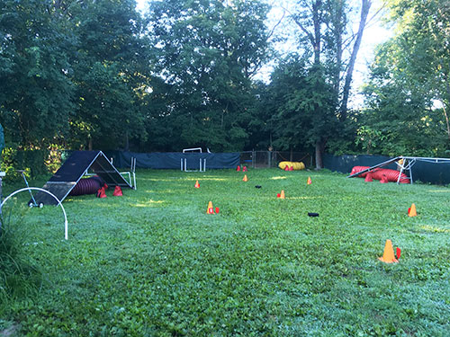 Yard set up with different agility obstacles and cones
