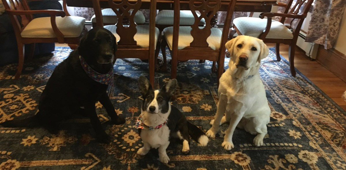 Tom, Zora and Breezie sit on a blue patterned rug in front of brown wood dining table and chairs