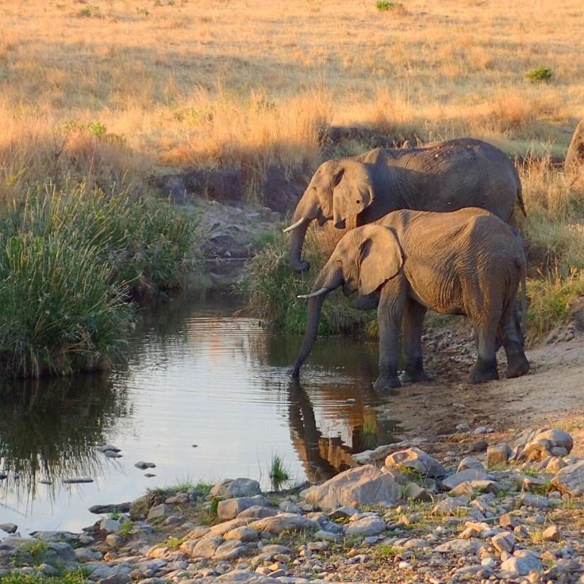 Photographic Journey Through Africa
