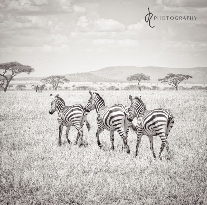 Photographic Journey Through Africa