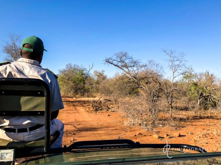 Our tracker looking for animals