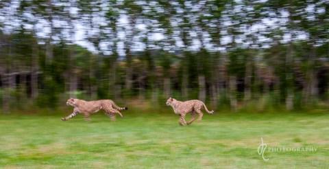 Running motion!