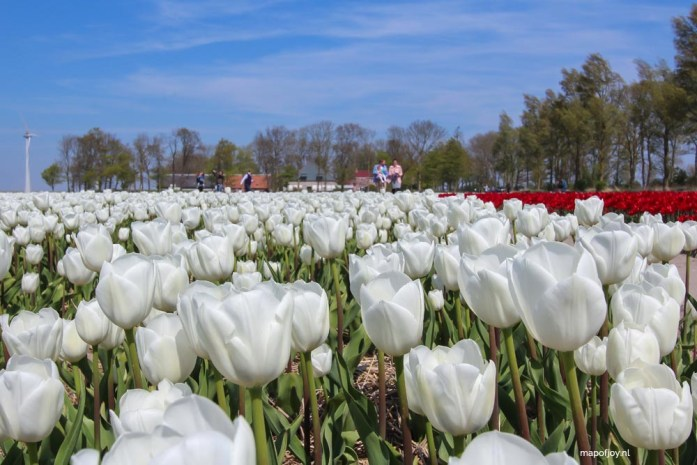 Tulpenfestival, Flevoland, Holland - Map of Joy