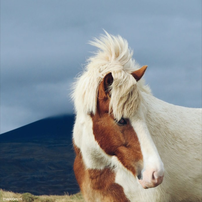 Icelandic horse, Snaefellsnes, Iceland - Map of Joy