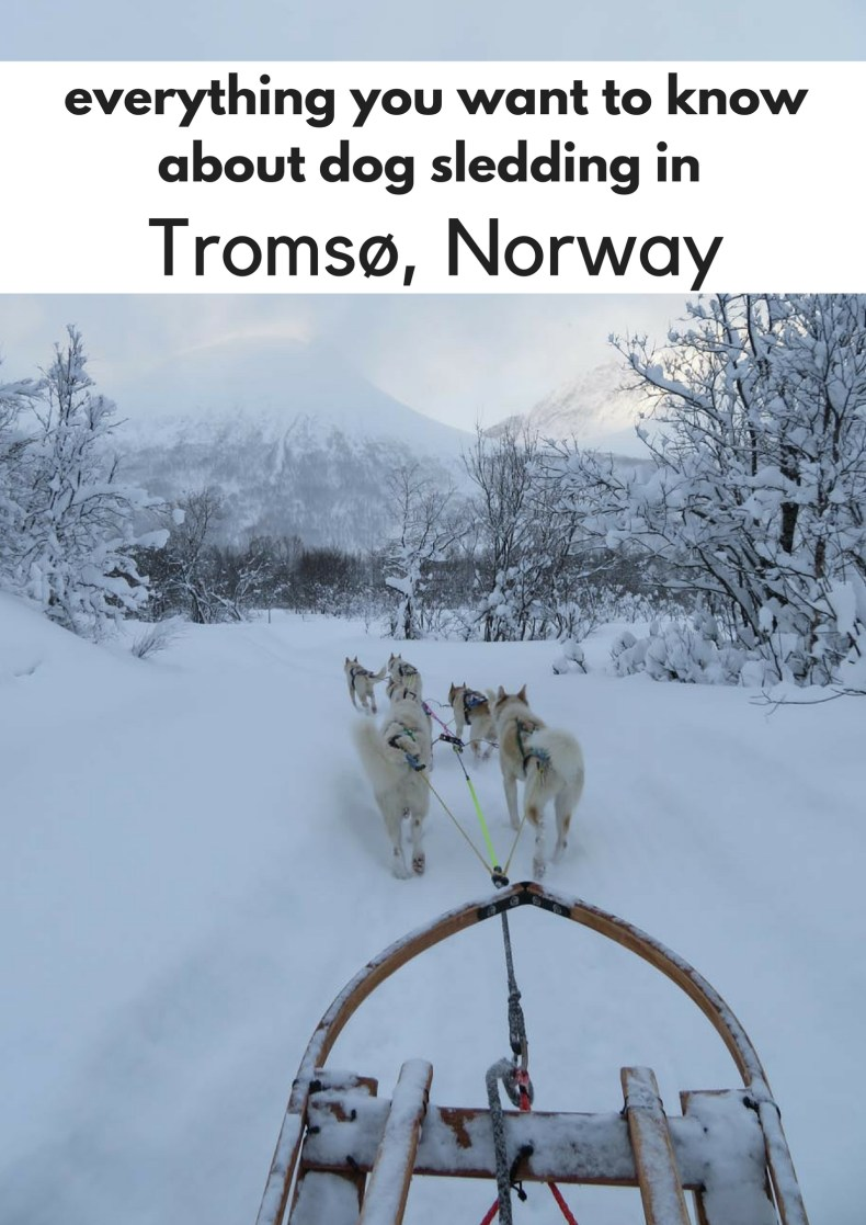 Everything you want to know about dog sledding in Tromso, Norway in the winter - Map of Joy