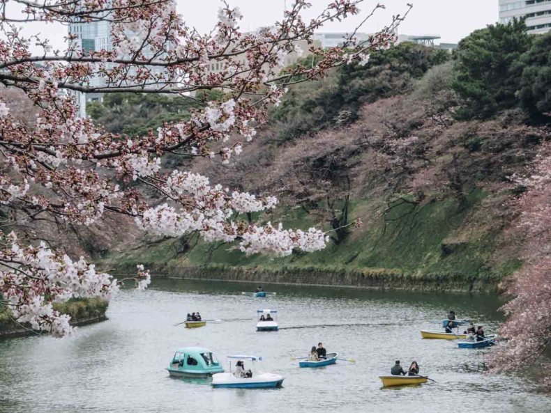 Chidorigafuchi Park, beste plek om kersenbloesems te zien in Tokio - Map of Joy