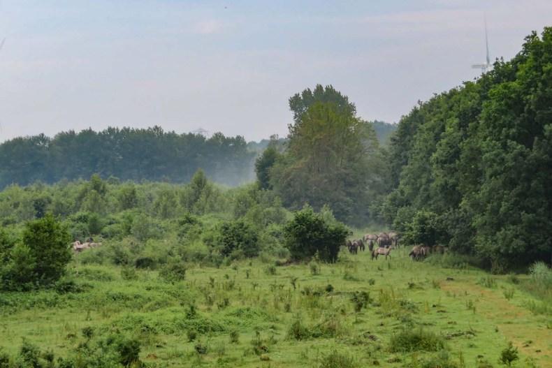 Horsterwold Zeewolde, Flevoland, wilde konikpaarden - Map of Joy