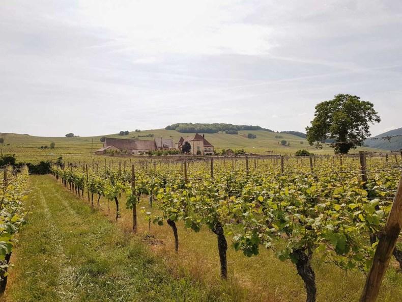 Autoroute 'Route de vin d'Alsace' - Map of Joy